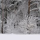 Winter at my window by Bluesrose