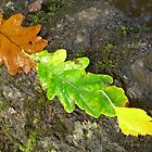 Simple leaves. by froglet