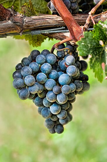 Peel Me A Grape by Marilyn Cornwell