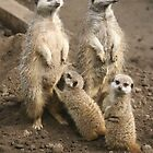 Happy families by froglet