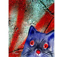 Gordon The Graffiti Cat Photographic Print