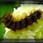 Caterpillar On a snowball tree by AngieBanta