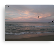 muted whispers of the songs of the seabirds Canvas Print