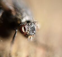 Got My Bug Eye on You by SharonD