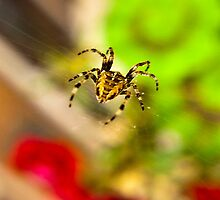 Spider Close-up by Trevor Kersley