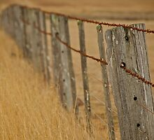 Barbed Wire Fence by James Torrington