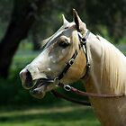 WHOSE A PRETTY BOY THEN # 1? by Helen Akerstrom Photography