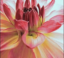 To Paint a Dahlia by paintingsheep