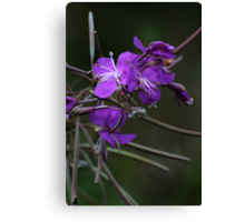 Forest flower in autumn Canvas Print