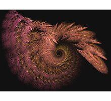 Straw spirals Photographic Print
