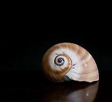 Nautilus shell on polished table by wbaneham