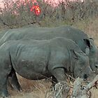 Rhino sunset by jozi1