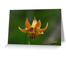 Canada Lily Greeting Card