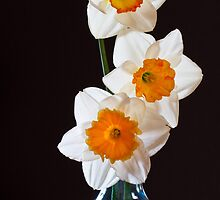 Three Daffodils by Chris Cobern