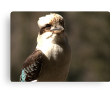 Kookaburra Dreaming Canvas Print