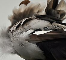 Duck Down - Feather Detail by Barbara Burkhardt