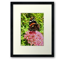 Red Admiral under wing detail Framed Print