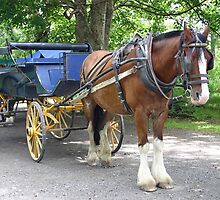 Horse and buggy taken at Killarney Lakes Ireland. by triciaoshea
