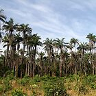 Tropical Bijagos Island, Guinea Bissau by helenlloyd