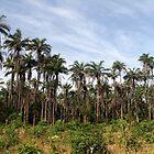Tropical Bijagos Island, Guinea Bissau by helenlloyd