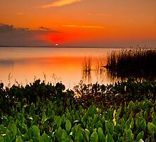 A Lake Apopka Sunset by Phillip  Simmons