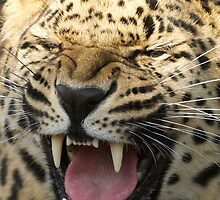 Angry Amur by DeeEss