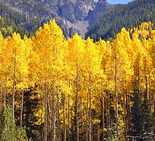 Aspen Glow by Jody Johnson