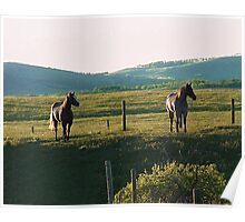 Horses at Sunset Poster