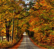 Leaves Are Falling Allready by BigD