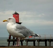 Gull by domediart