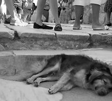 Let Sleeping Dogs Lie by titus