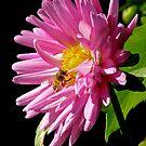 FP and The Bee by Patty (Boyte) Van Hoff