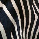 Stripes by Stuart Robertson Reynolds