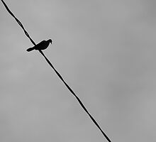 birds on a wire  by scout skip