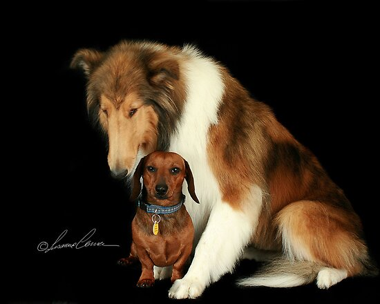 Best Friends by Susanne Correa