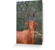 Why the Long Face? - Hartebeest Greeting Card