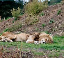 Grrrrr   Sunday lunch then snoozzzzzzz.jpg by Nala
