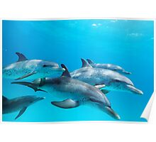 Dolphin Dreamin' Poster