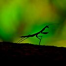 Mantis Silhouette by Paul Davis