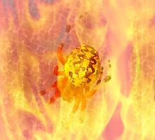 Orbweaver in Fire by teresa731
