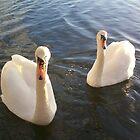swans by caroline1983