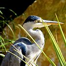 Heron ... by eithnemythen
