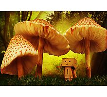 Danbo In Wonderland Photographic Print