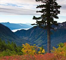 Cascade Mountains from Artist Point by Barb White
