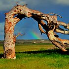 Leaning Tree Rainbow of Greenough WA by Miles Moody
