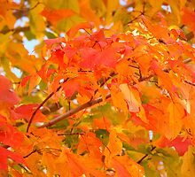 Flaming Maple Leaves by reindeer