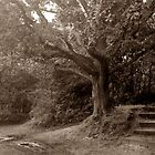 Sepia Forest by Jon Clifton