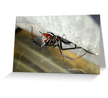 Black Widow ~ Female Greeting Card