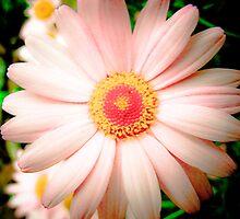 Peaches N cream  by JustJazzy