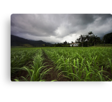 Kingdom of Cane Canvas Print